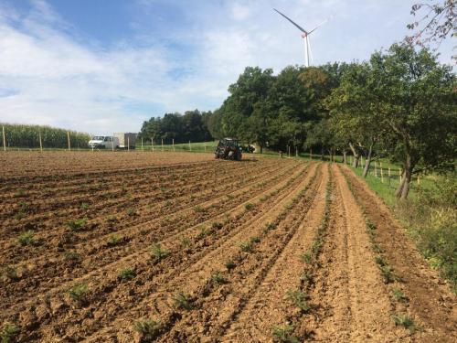 Neuanlage Christbaumplantage Remlingen